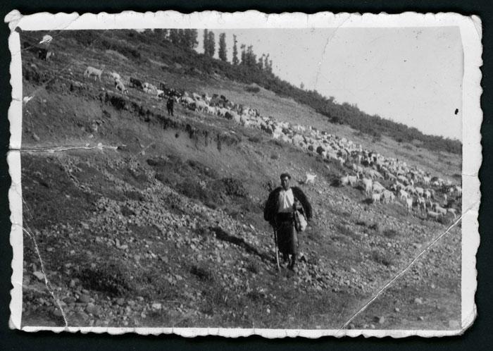 Efigenio Domínguez con el rebaño en el monte de Lugán