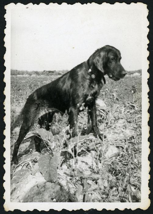 Perro de caza de un amigo de Saturnino González