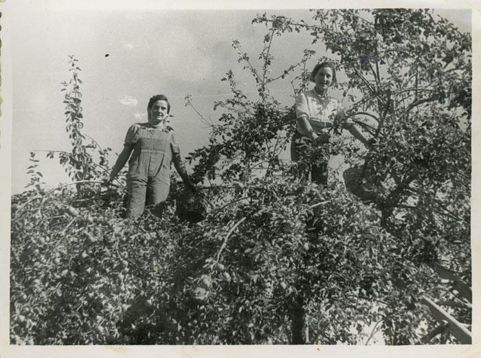 Avelina González y Felisa Gutiérrez subidas en un manzano en la huerta familiar en Cerezales del Condado
