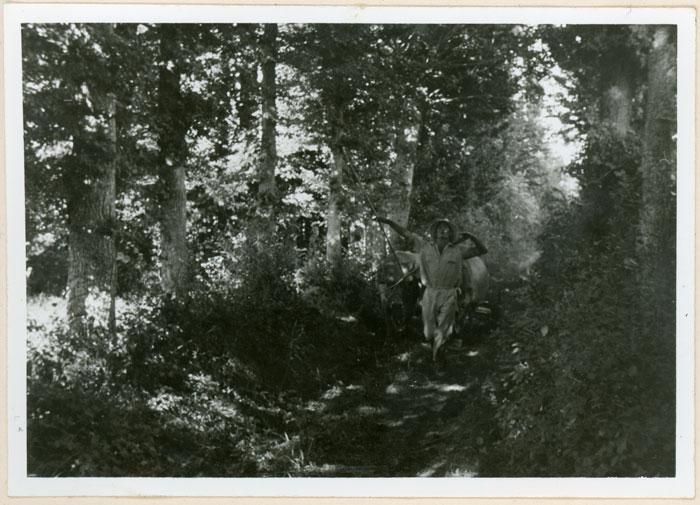 Valeriano con la máquina de segar y las vacas en un camino rodeado de árboles en Cerezales del Condado