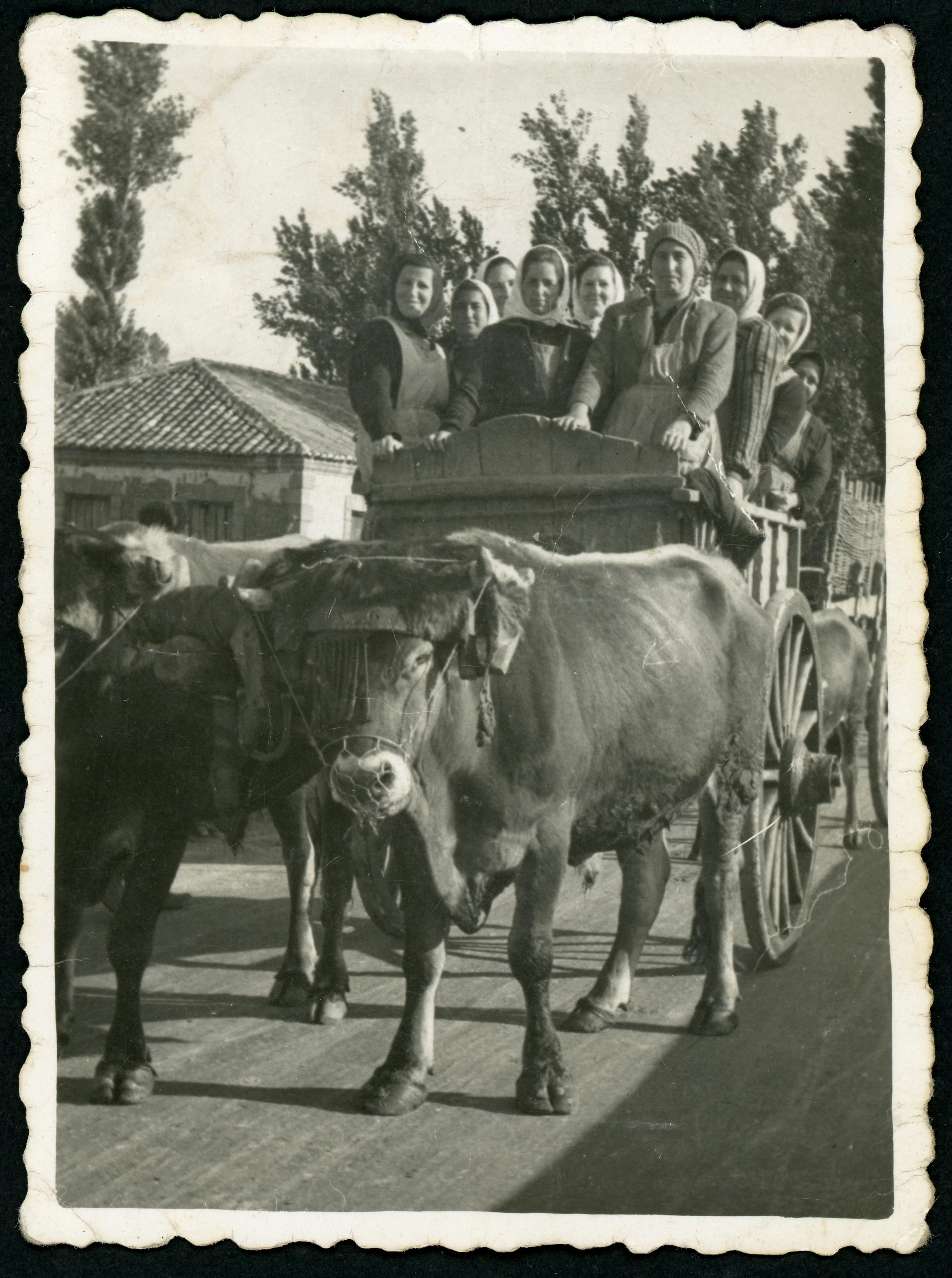 Mujeres en un carro de hacendera para hacer gaviones como protección contras las inundaciones.