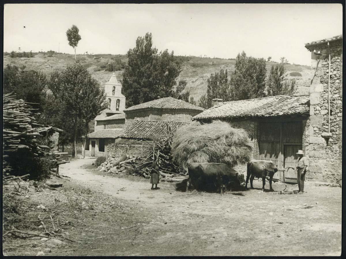 Unciendo una pareja de bueyes en Lugán