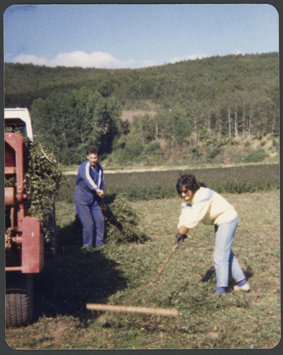 Joaquin Campillo (hijo) y Ana Campillo recogiendo menta en la vega de Lugán
