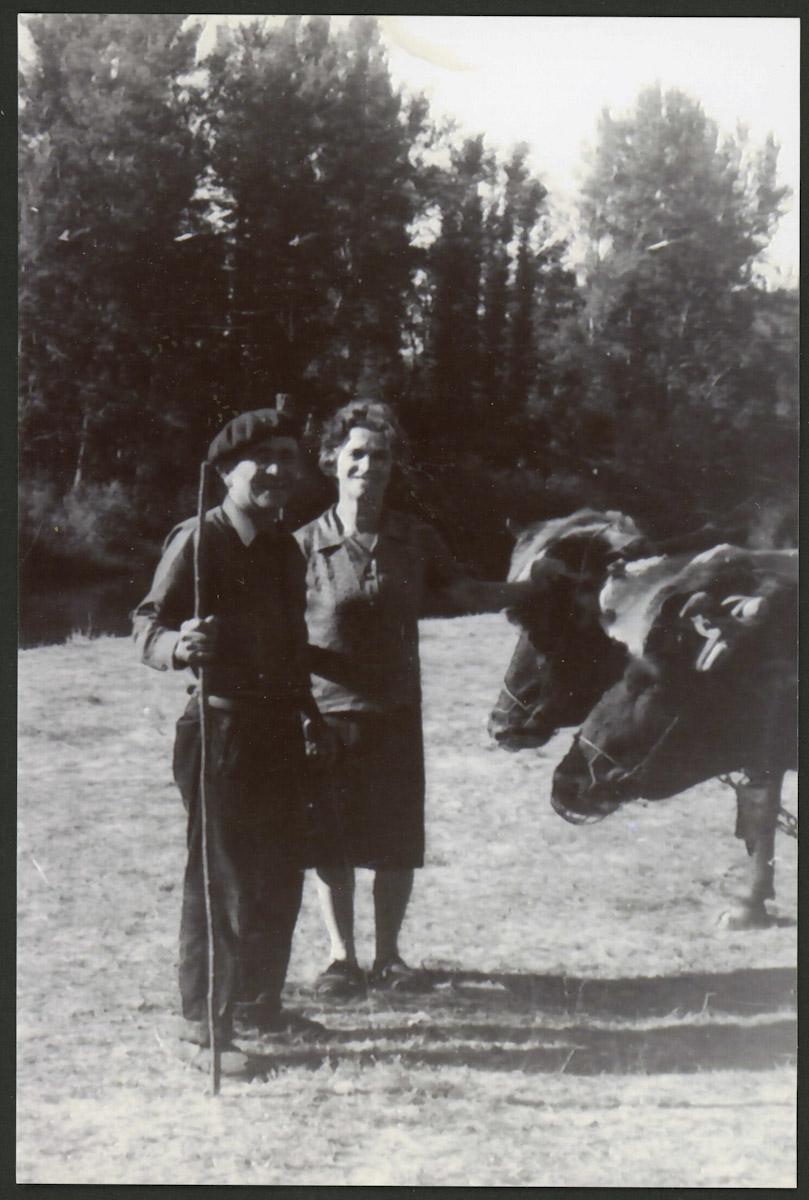 Artemio Escapa y Teresa Viejo con las vacas en la era de Arriba de Lugán