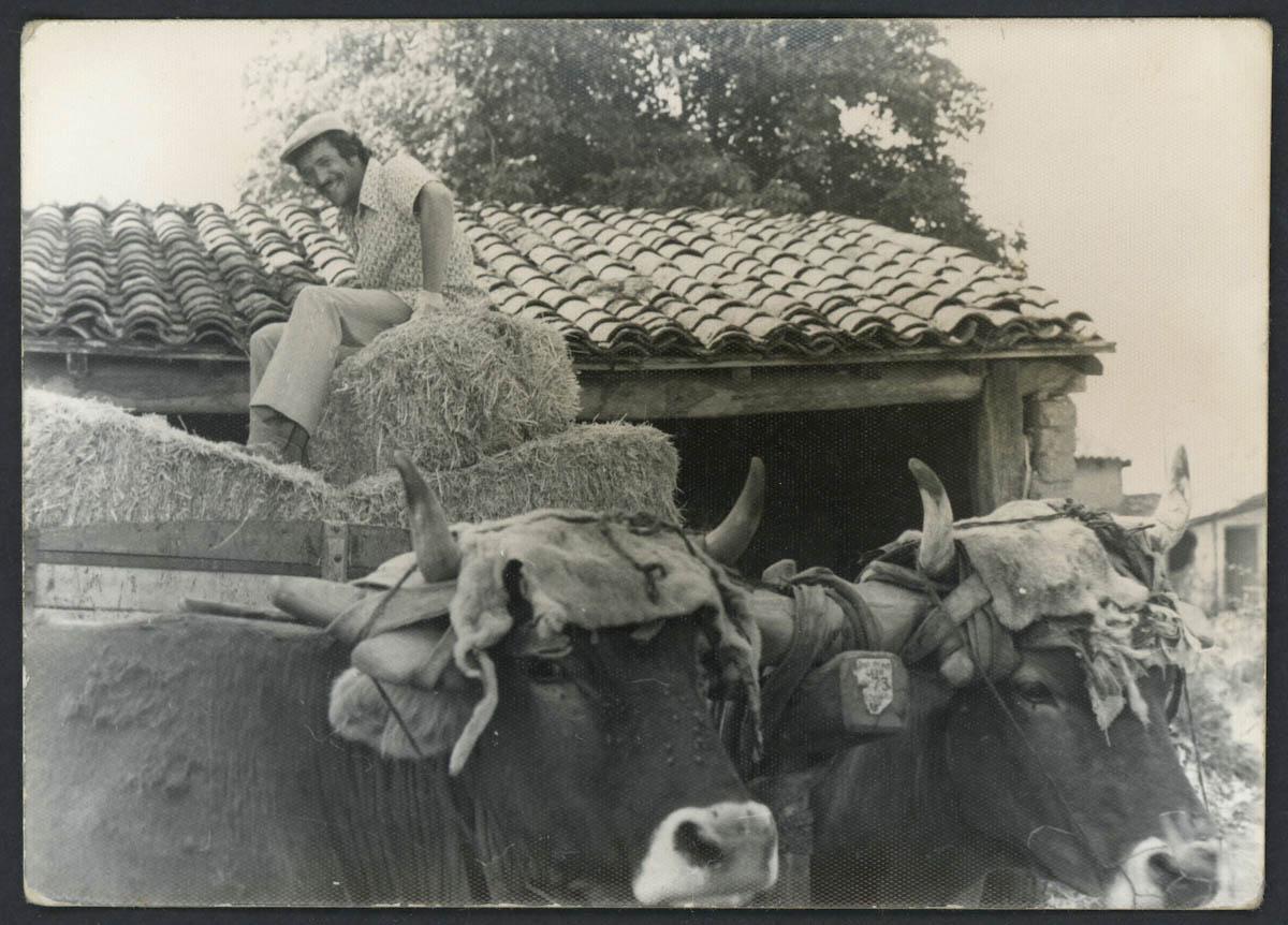 Miguel Aveleira sobre un carro de Alpacas