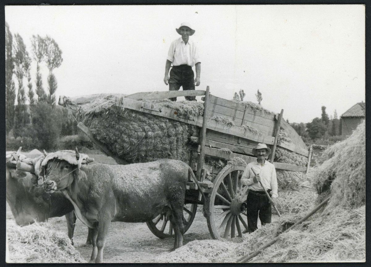 Nano Fernández y Cándido Fernández con un carro de paja en Lugán